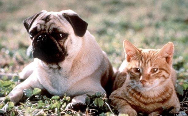 Milo and Otis 1a